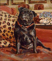 Black Pug Study by Claire Eastgate