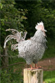 Chicken Wire Sculpture by Paula Joule Blake