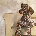 PRINT Pointer on Cream Chair by Jenni Cator