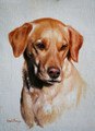 Yellow Labrador Portrait Sample by Hazel Morgan
