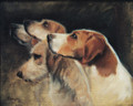 Hound Portrait Sample by Hazel Morgan