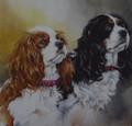 Cavalier King Charles Spaniel Portrait by Paula Vize