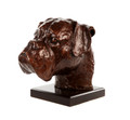 Boxer Head Study by Marie Ackers