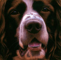 Larger Than Life Springer I by Nigel Hemming