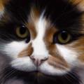 Larger Than Life Cat by Nigel Hemming