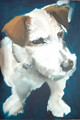 Jack Russell Portrait Sample by Sally Muir