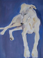 Longdog  Portrait Sample by Sally Muir