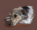 Portraiture Sample of Scampy by Hannah Steedman