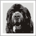 Print of Newfoundland on Grey by Emily Burrowes