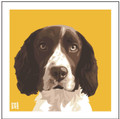 Print of a Springer Spaniel on Yellow by Emily Burrowes