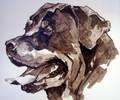 Rottweiler by Ian Mason