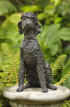 Pandora a Poodle Sculpture by Rosemary Cook