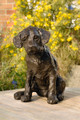 Curiosity a Labrador Pup Sculpture by Rosemary Cook