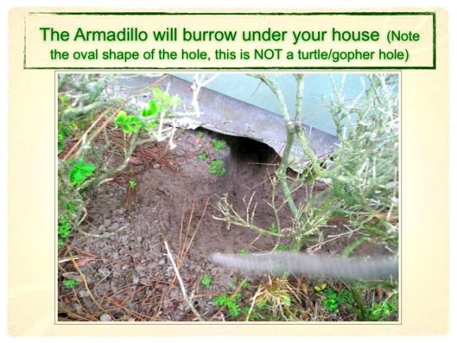 armadillo-pres-slides.009r.jpg