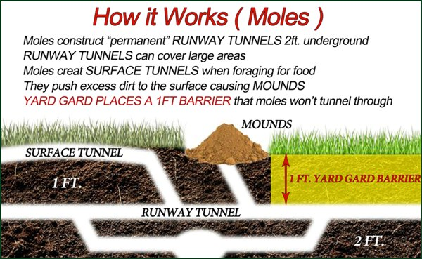 diagram-how-it-works-mole.jpg