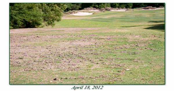 golf-course-moles-1.jpg