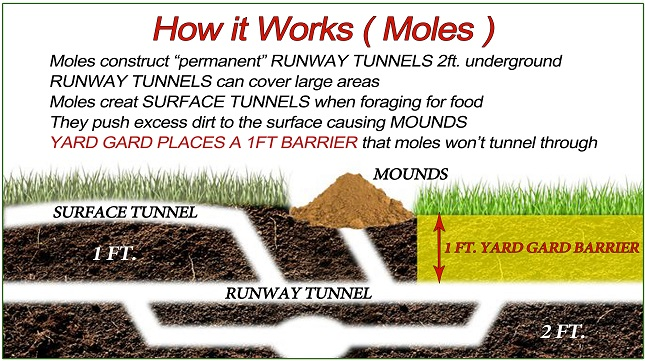 How to Get Rid of Moles in Your Yard - Yard Gard Animal ...