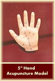 Hand Acupuncture Model 5""