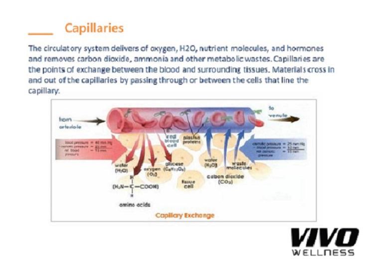 capilaries1.jpg