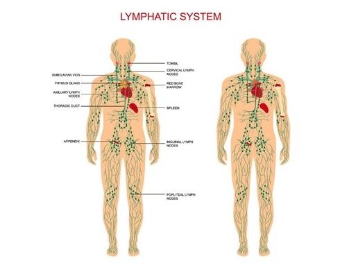 lymphaticsystem.jpg