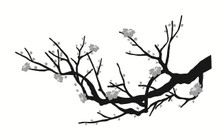 Branch Wall Decals