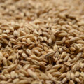 Briess Pale Ale Malt, 1lb
