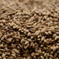 Briess Victory (Toasted) Malt, 1lb