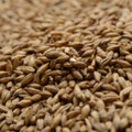 Certified Organic Brewers Malt, 50 lb
