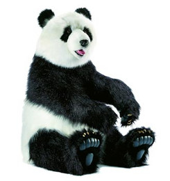 Giant Panda Sitting