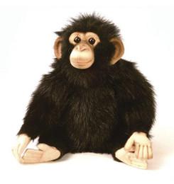 Junior Chimp