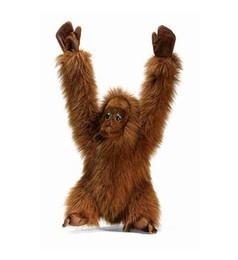 Orangutan Kid