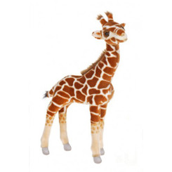 Giraffe: Baby