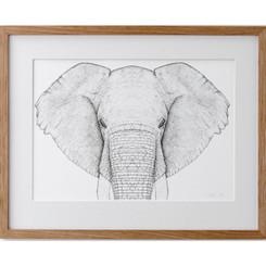 Ethan the Elephant - Full