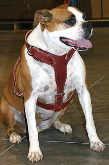 sally-with-harness.jpg
