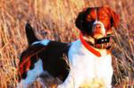 hunting-dogs-products.jpg