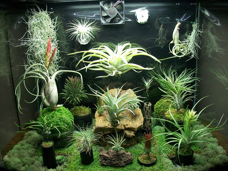 growing plants with LED strip lights examples