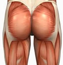 Biggest glute muscle (also known as Musculus Gluteus Maximus)