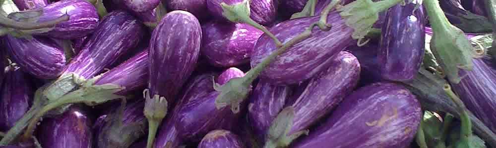eggplant-header.jpg