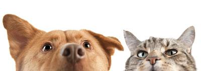 dog-cat-looking-up-400.jpg