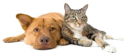 dog-cat2-425x189.jpg