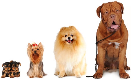 dog-group-452x275.jpg