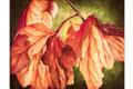 Backlit Autumn Leaves (Download)