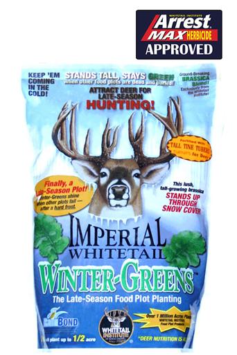 wintergreens-16656.1452883795.386.513.jpg