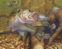 Fish Artwork 240-08b-5 Micro Fiber Cleaning Cloth