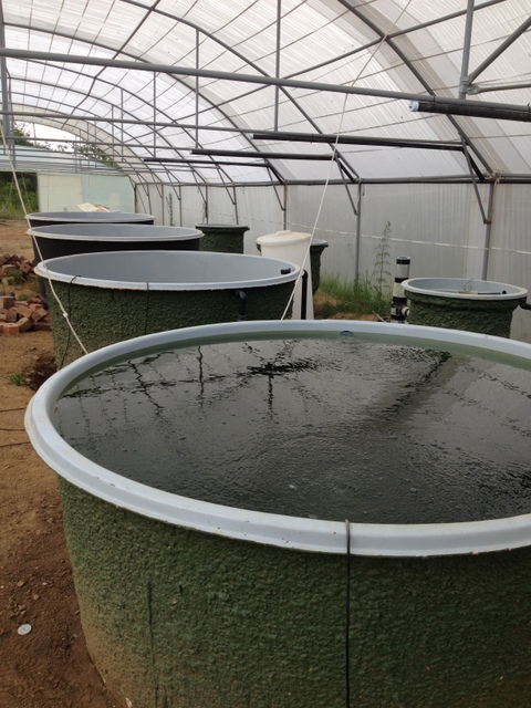 Myaquaponics Valverde Country Restaurant Commercial