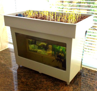 Desktop Mini Aquaponics System Starting To Show