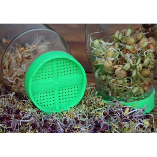 sprout-lids.jpg