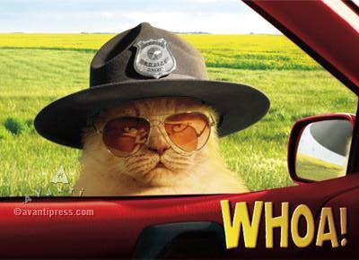 trooper cat, birthday card, police, traffic stop