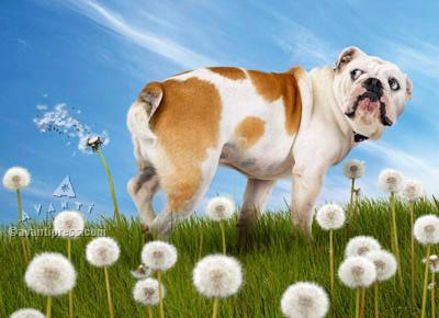 bulldog farting on dandelions birthday card