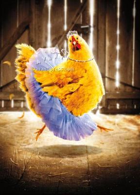 chicken in a tutu birthday card